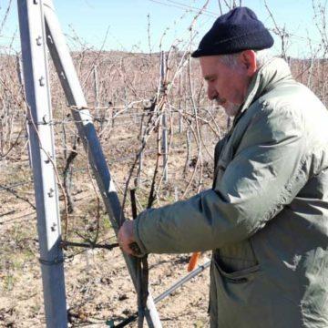 På jakt etter ur-druer i Bulgaria